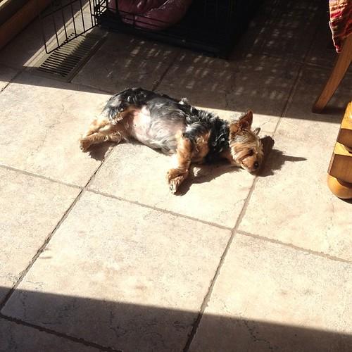 Wish I had time to sunbathe!