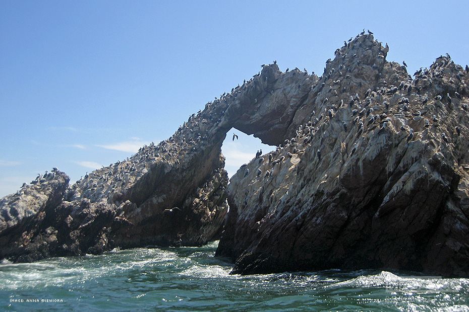 Ballestas Islands, Peru.