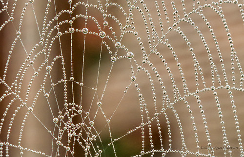 Spiderweb with water pearls