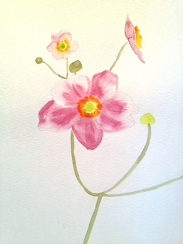 Watercolour anemones