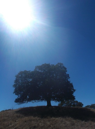 Oak Tree Silhouette-Shell Ridge