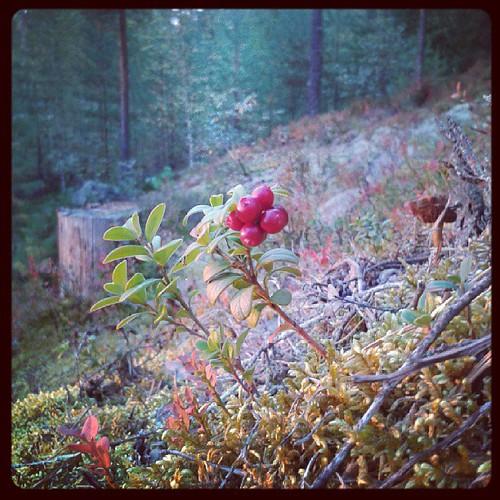 Metsässä <3