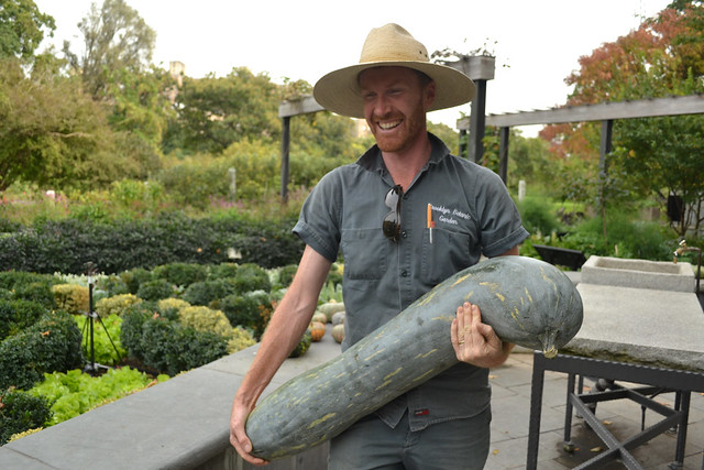 Though it looks like an overgrown zucchini, Cucurbita moschata 'Naples Long' is actually a very old heirloom variety of pumpkin from Italy. Photo by Blanca Begert.