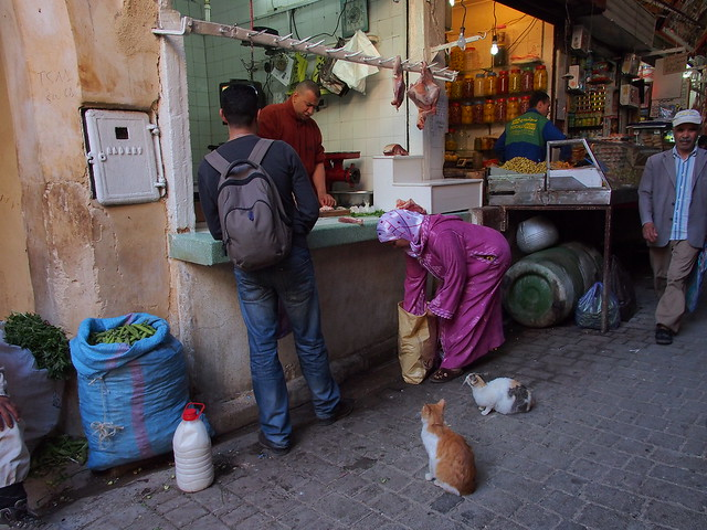 有貓咪認證的店