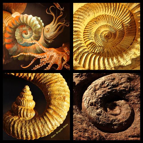 Sonderausstellung Siegsdorf Mammutmuseum Naturkundemuseum Bayern Mollusken harte Schale weicher Kern