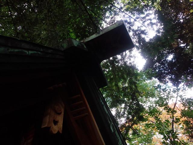 神社の木漏れ陽