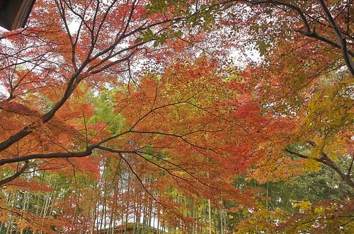 【写真】2013 紅葉 : 白沙村荘/2020-12-28/IMGP3718