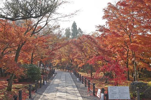 【写真】紅葉 : 永観堂