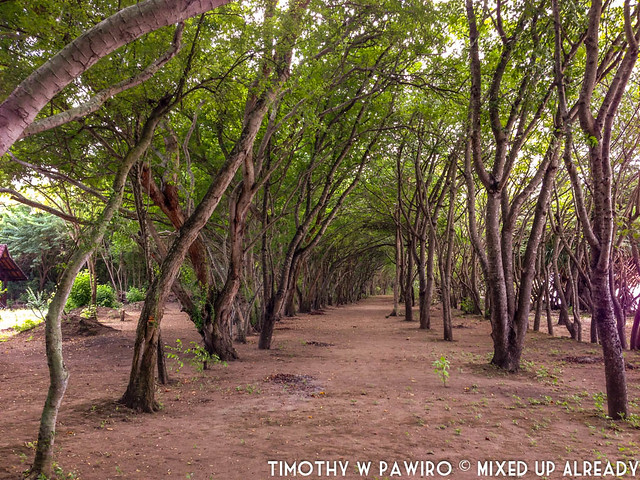 Indonesia - Lombok - Gili Nanggu - The trees - Winter Sonata