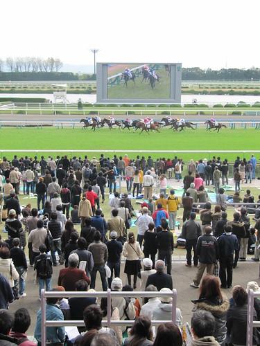 京都競馬場のレース観戦風景