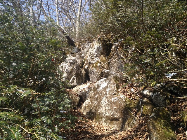 西台山 登山道