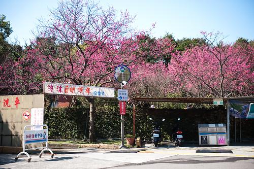 陽明山花卉試驗所-1