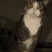 Cat in sepia+