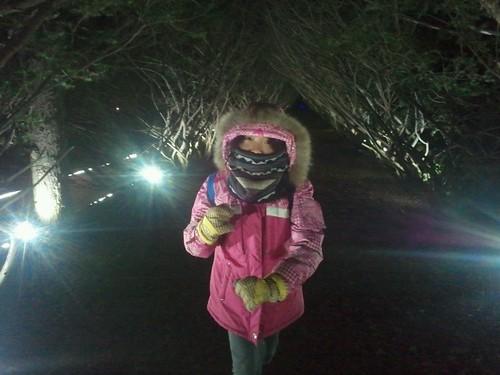 빛축제 | 벽초지 수목원