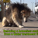 Mufasa's rescue video is READY! by Eldad Hagar (Please support Hope For Paws)