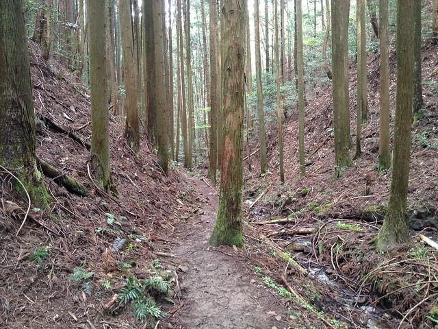 納古山 初心者コース 登山道