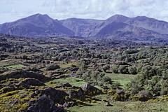 Ireland in the 1990s