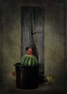 Still Life With Cactus and Parsnips