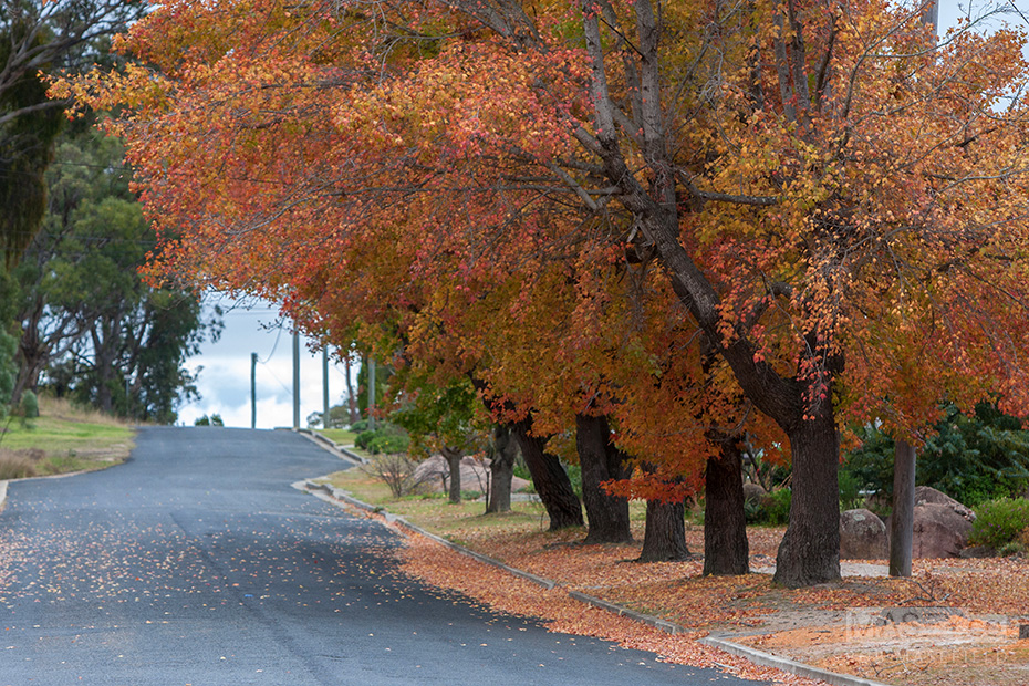 Autumn colours in Stanthorpe.