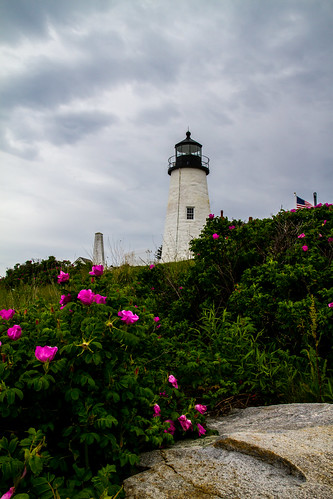 Pemaquid with Roses