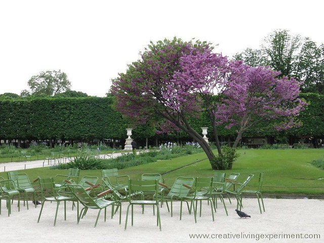 Tree in Bloom, Tuileries Gardens
