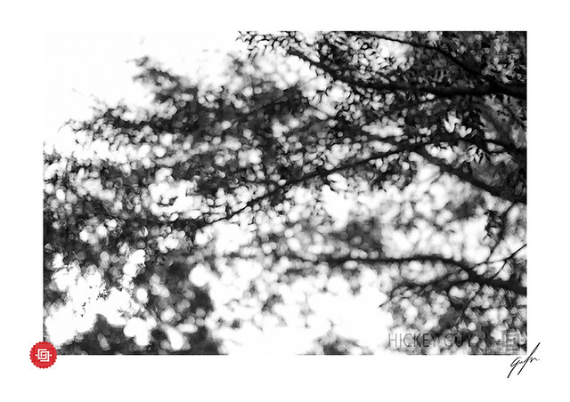 Tranquil Transcendence