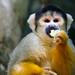 Hungry Monkey by @Doug88888