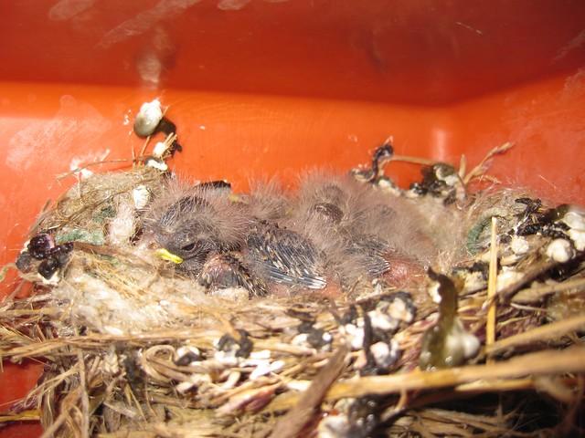 Baby Birds are ugly.