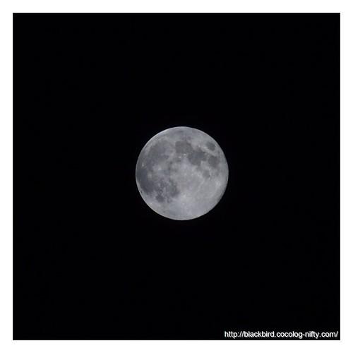 Blue Moon #03