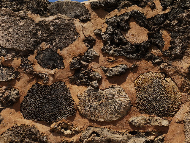 Fossil coral used in the wall of Galle fort [20130924]