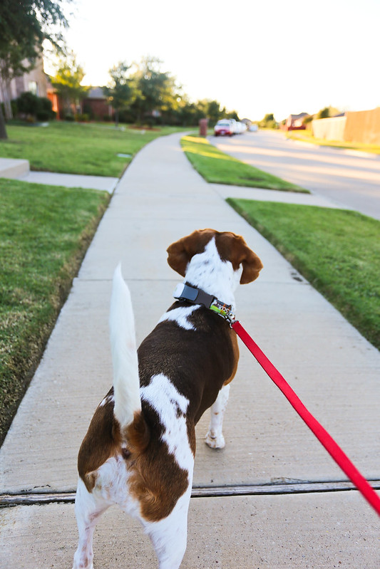 TAGG Pet Tracker-8
