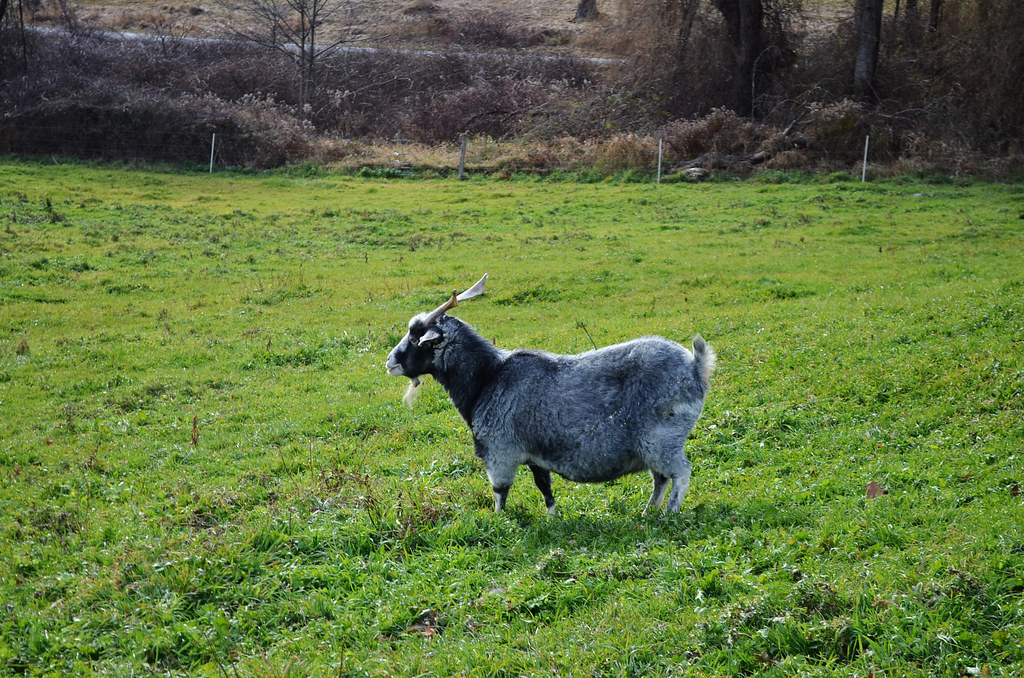 field trip // walpole valley farms