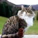 Cat by ecker
