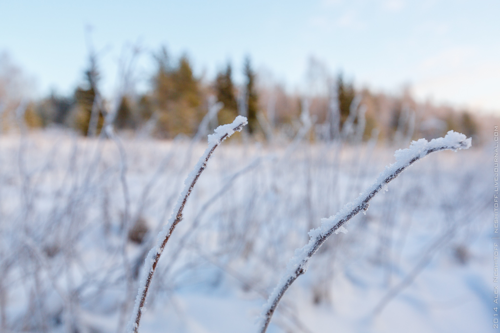 2014-Russia-Karelia-Onemyday2-009