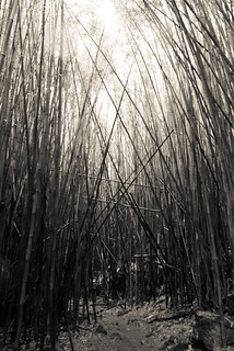 Bamboo Forest, Oheo Gulch
