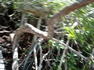 Mexico--Cenote