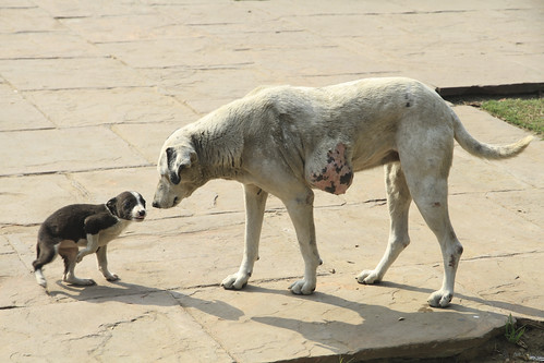 a puppy and a dog live around the entrance of world heritage Humayun's Tomb