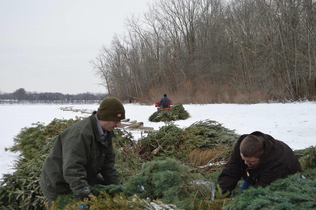 Christmas Tree Farm In Indiana