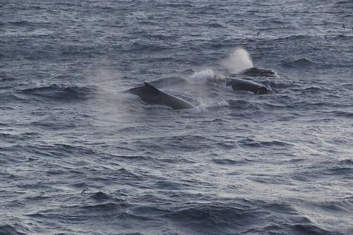 164 Walvissen