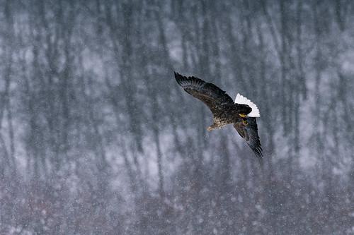 In the snow by ja1dql