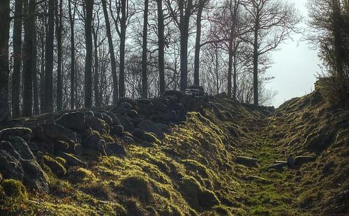 wood 50mm oak forrest mark oaks holloway hdr västragötaland västergötland oakforest hollowway sunkenlane 3exposurehdr bönhult sjuhärad fotskäl