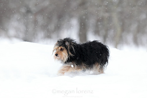 Snow Day by Megan Lorenz