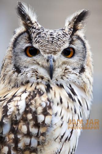 Eagle Owl Portrait - EXPLORED 02.05.2014