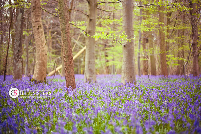 Bluebell Woodland - Day 296/365