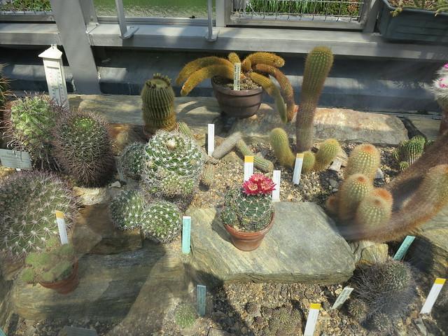 Разные кактусы