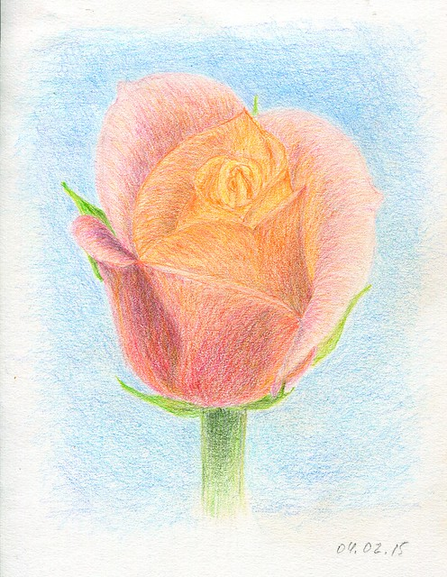 pink rose. A5. colored pencils