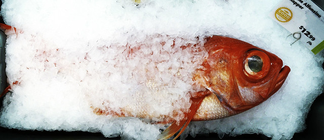 Alfonsino Snapper in ice chips; Whole Foods, San Francisco (2015)