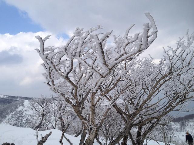 藤原岳 山頂 樹氷