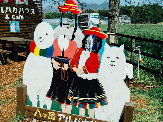 160505_alpaca-2