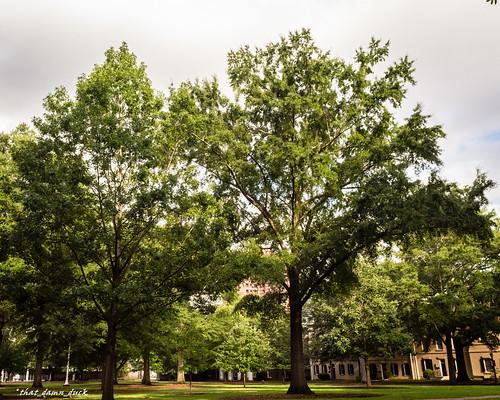 nature landscape unitedstates southcarolina usc universityofsouthcarolina
